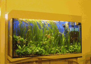 Купить аквариум