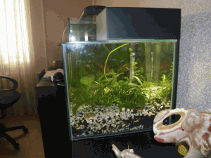 Приобрести аквариум
