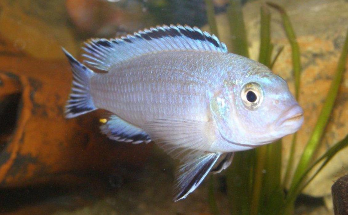 Рыбки для аквариума в Рязани