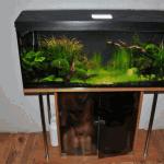 Покупка аквариума