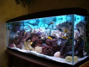 Купить аквариум в Рязани