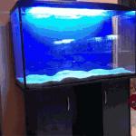 Расценки на качественные аквариумы