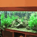 Цена аквариума